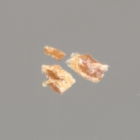 smallpox scab