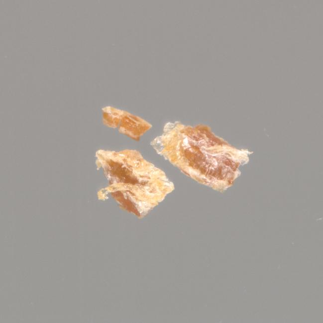 Mss1 M3855 c, Smallpox Scab | Virginia Museum of History & Culture's